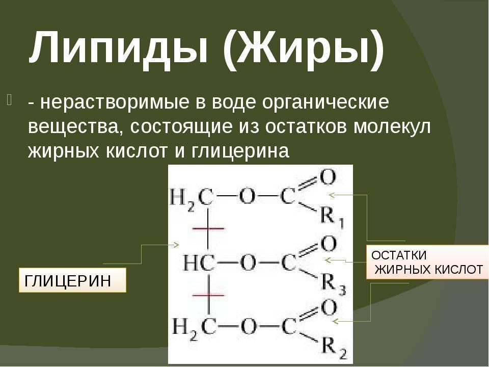 химические свойства и строение липидов