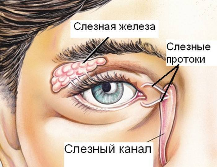 слезные каналы глаза