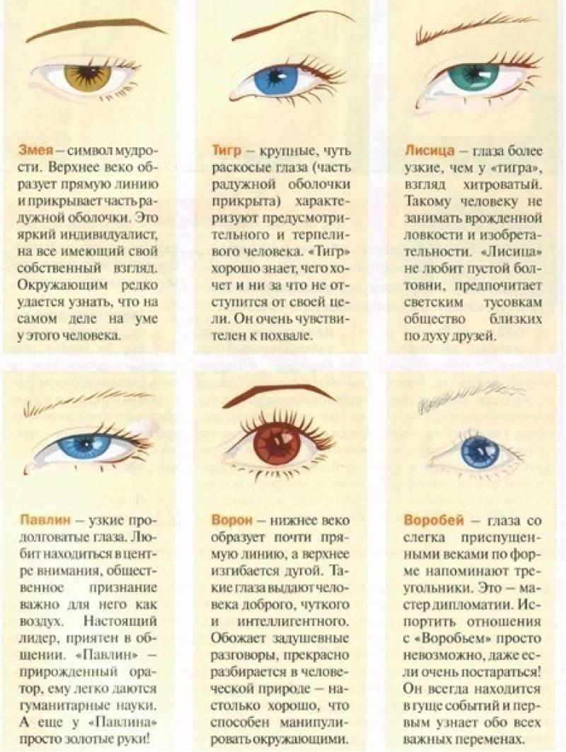 форма глаза человека