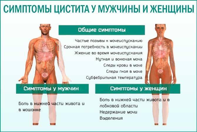 Симптомы цистита у мужчин. цистит: лечение (препараты)