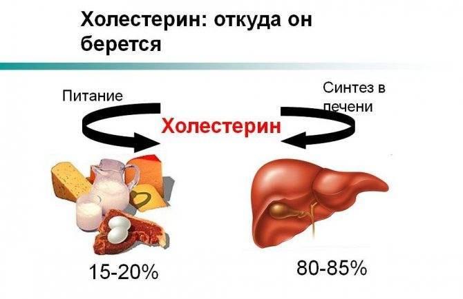 Холестерин лпнп (ldl-c) – что это такое и какова его норма в крови?