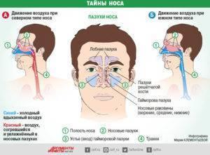 из носа течет прозрачная жидкость при наклоне