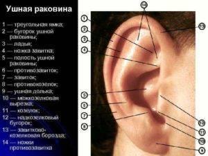 Воспалилась ушная раковина что делать. причины воспаления ушной раковины и способы диагностики перихондрита