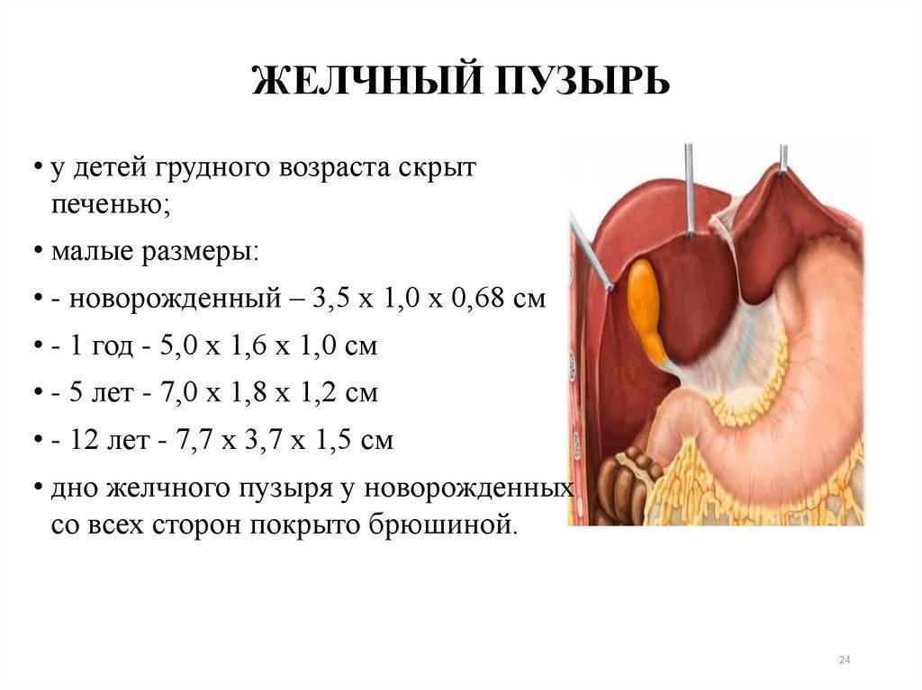 увеличение желчного пузыря у ребенка