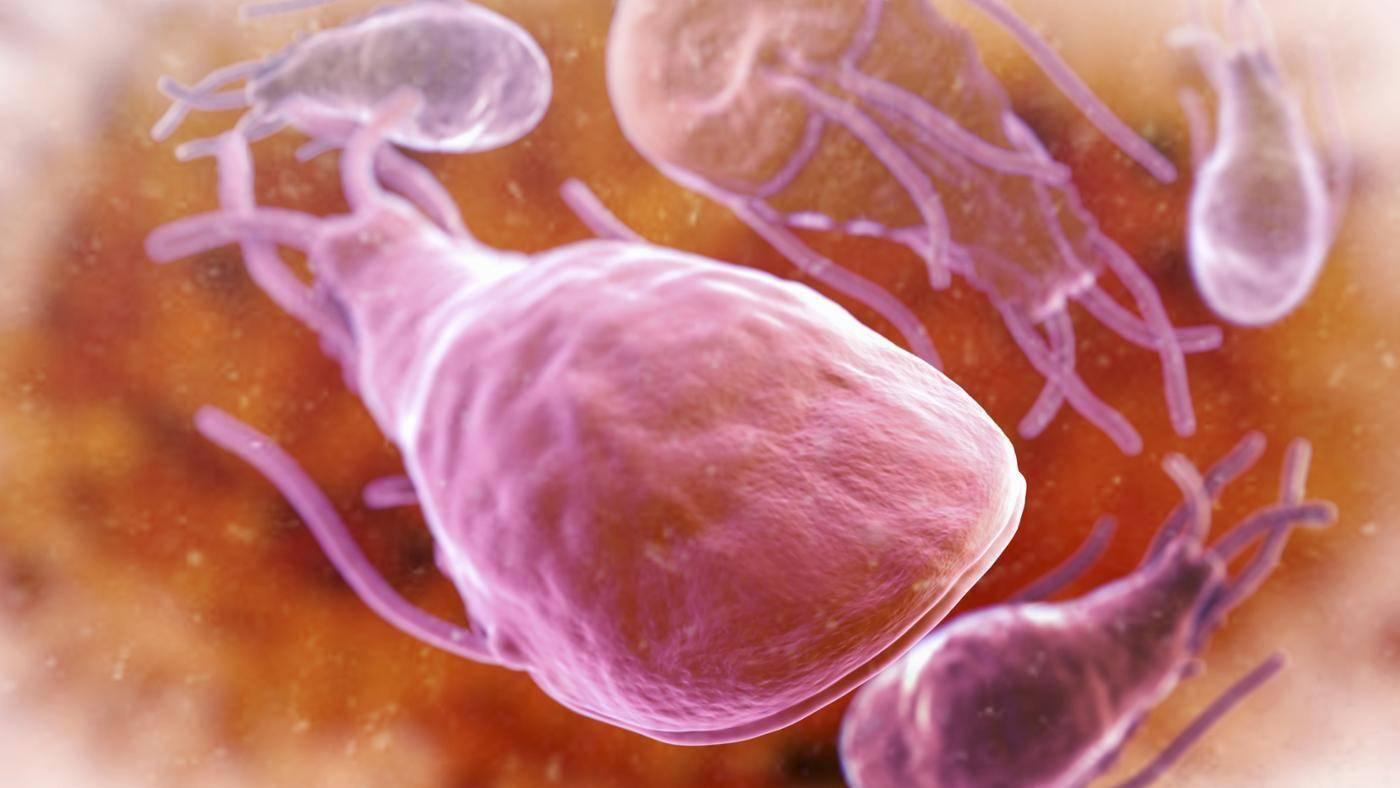 Паразитарные заболевания человека и их роль в патологии внутренних органов