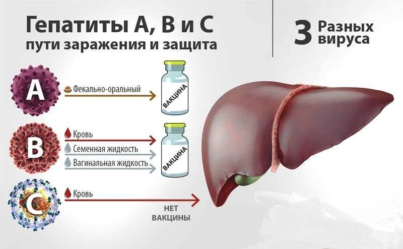 Вирусная нагрузка при гепатите с