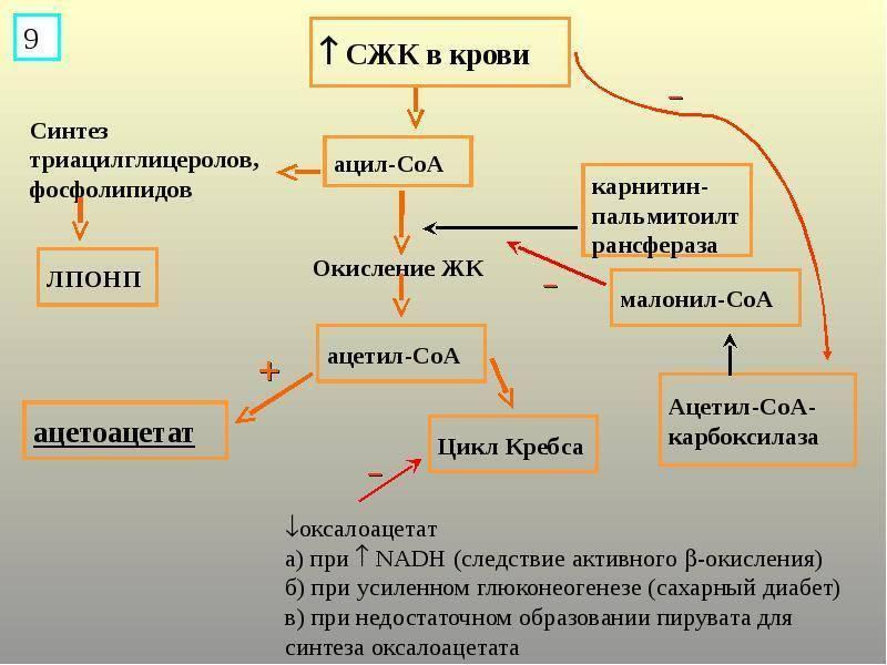 Строение клетки. комплекс гольджи. эндоплазматическая сеть. лизосомы. клеточные включения