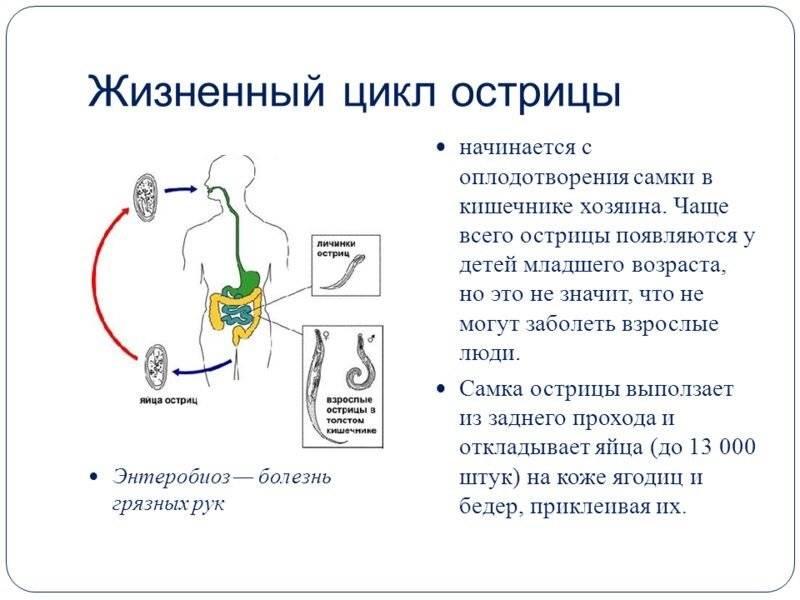 Острицы у детей - симптомы болезни, профилактика и лечение остриц у детей, причины заболевания и его диагностика на eurolab