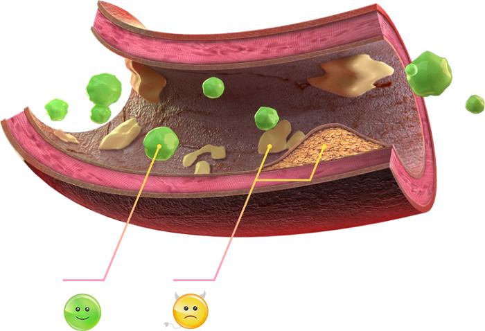лечение плохого холестерина народными средствами