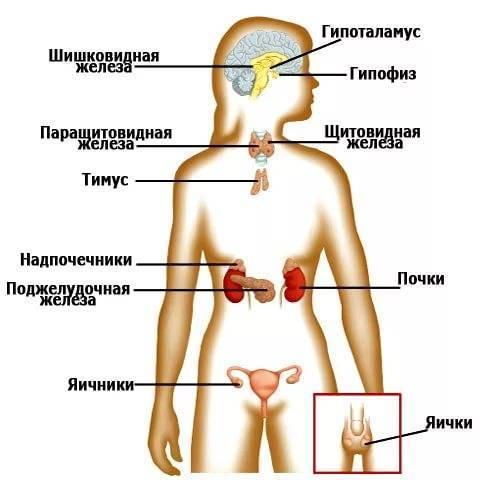 у какого врача проверить щитовидную железу