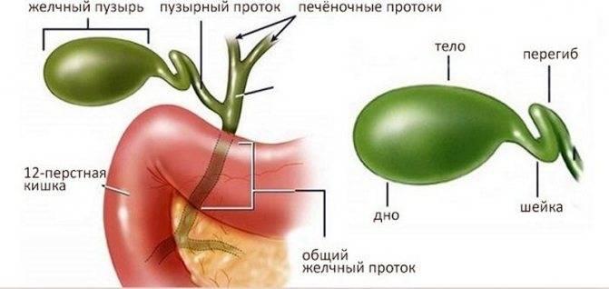 лекарства при перегибе желчного пузыря