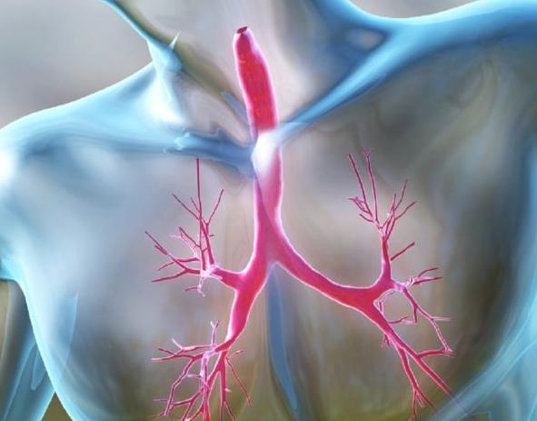 Причины, симптомы и лечение острого трахеита у взрослых и детей