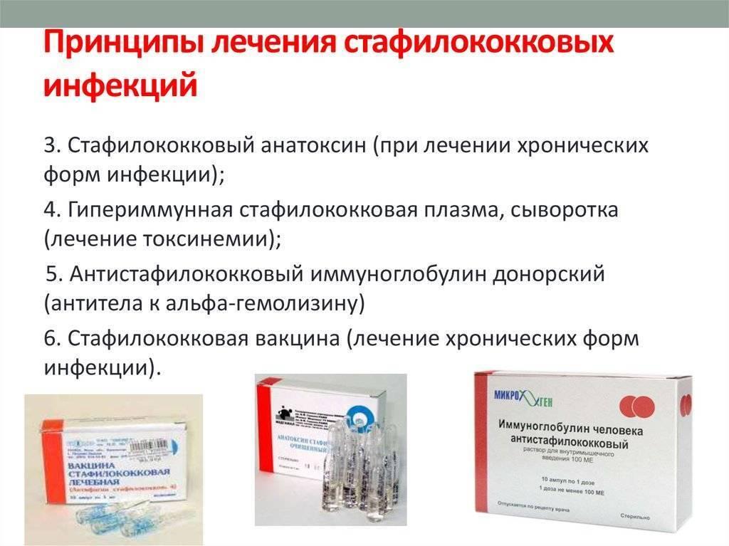 золотистый стафилококк в носу лечение народными средствами