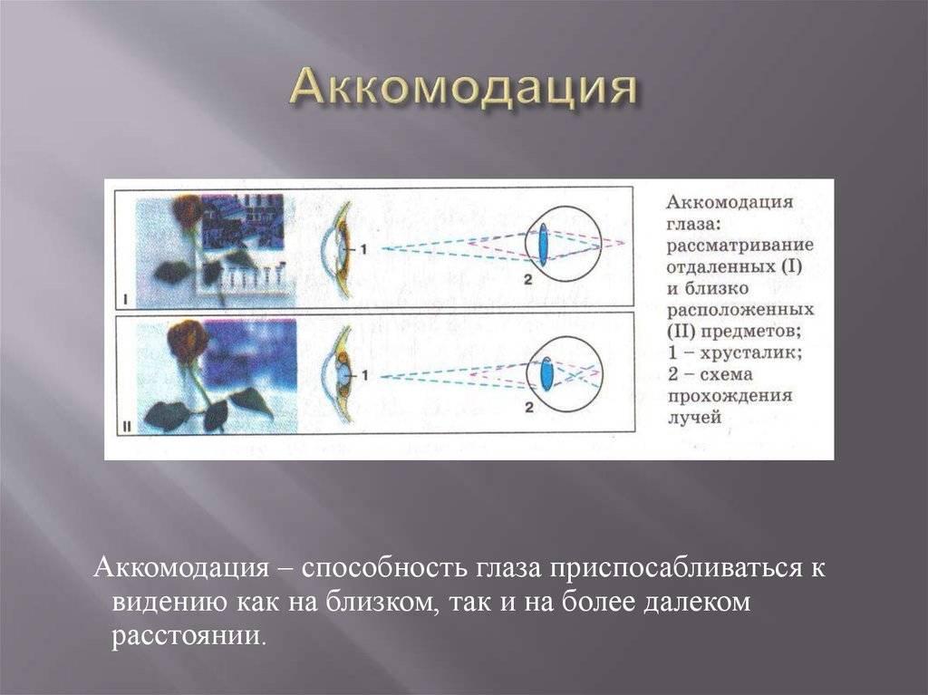 Аккомодация (биология)