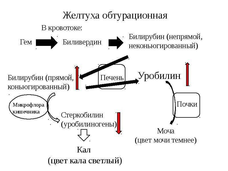 классификация желтух