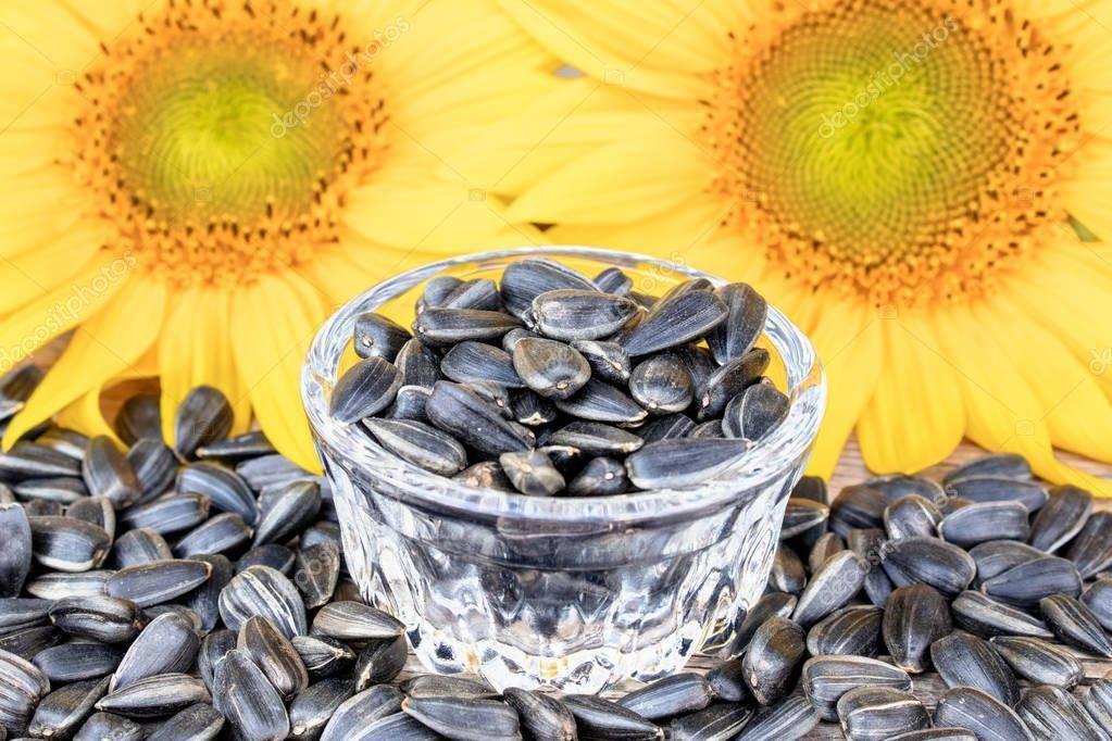 Семечки подсолнуха и тыквы: повышают или понижают уровень холестерина?
