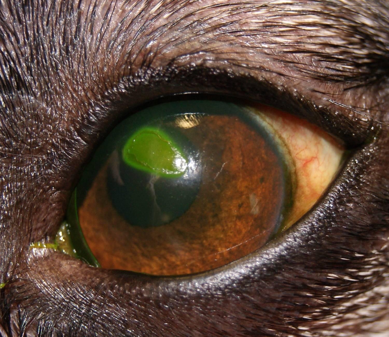 Воспаление роговицы глаза или кератит