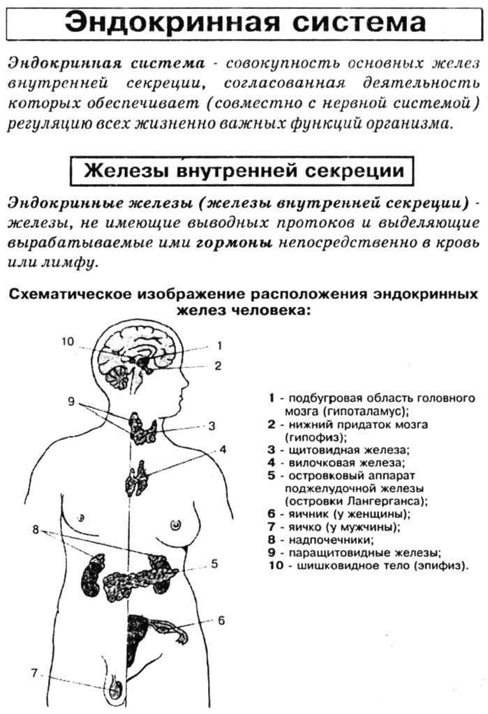 Анализы на гормоны как достоверный способ оценки состояния организма