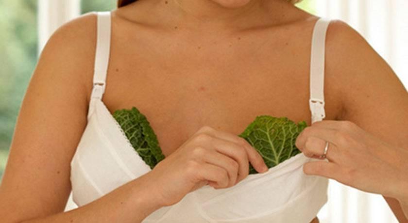 Рецепты народных средств для лечения мастопатии
