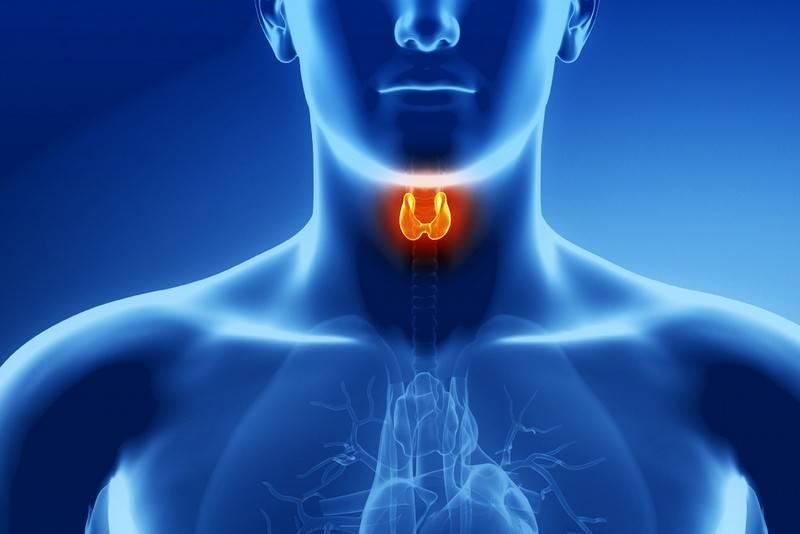 Проблемы с эндокринной системой симптомы у женщин. распространенные нарушения работы эндокринной системы