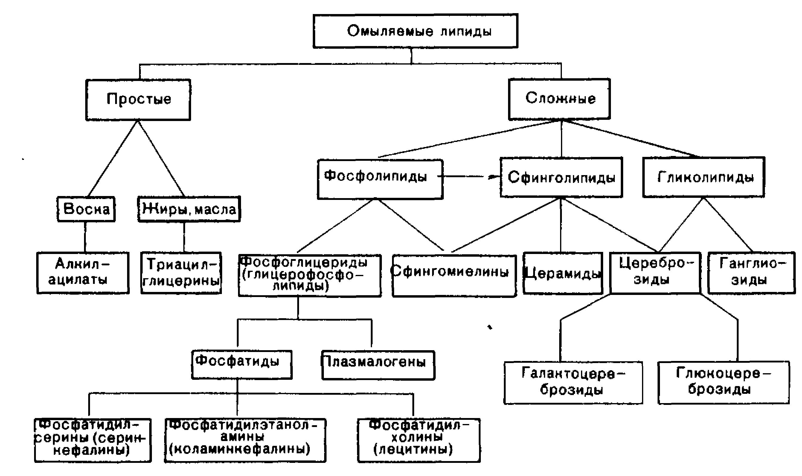 какие вещества относятся к липидам их классификация