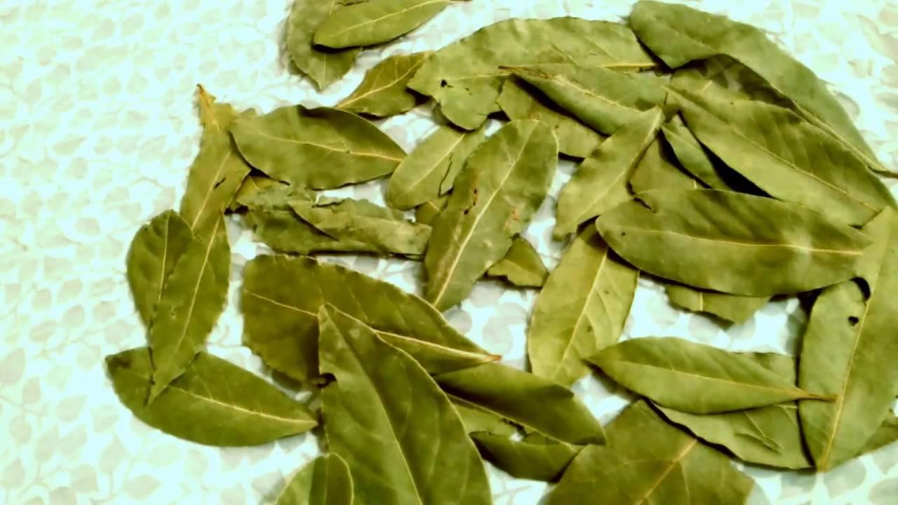 17 болезней, которые лечит лавровый лист