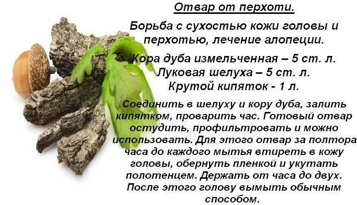 Кора дуба при геморрое: польза и рецепты приготовления