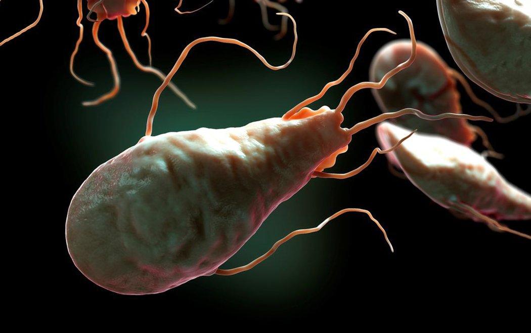 Паразитарные заболевания человека