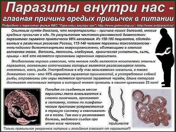 как глисты влияют на организм человека