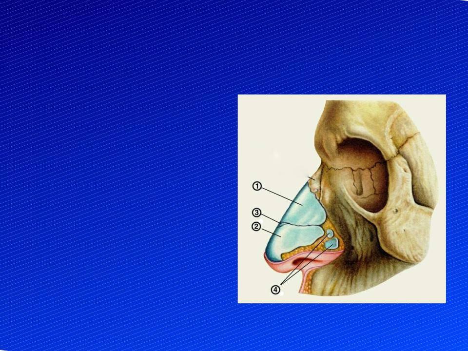 От чего зависит форма носа? есть ли корректирующие упражнения для носа?