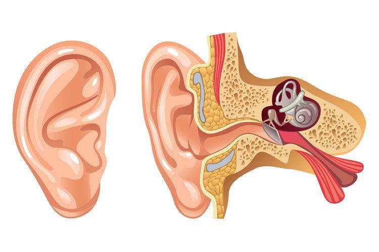 лечение катарального отита