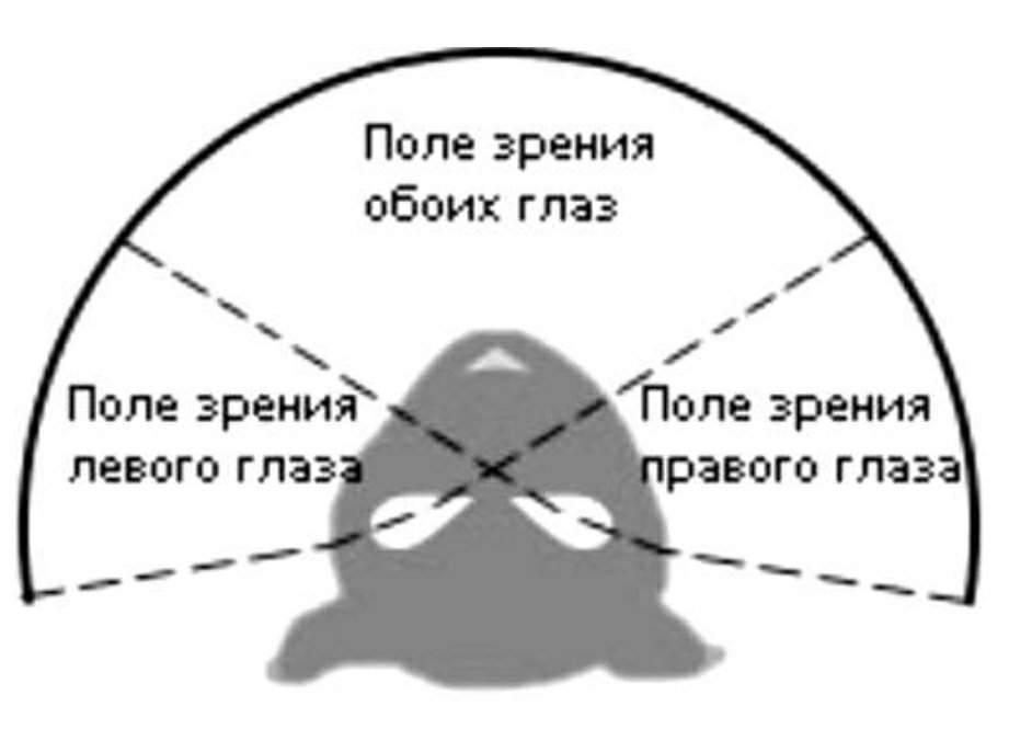 Нарушения периферического зрения