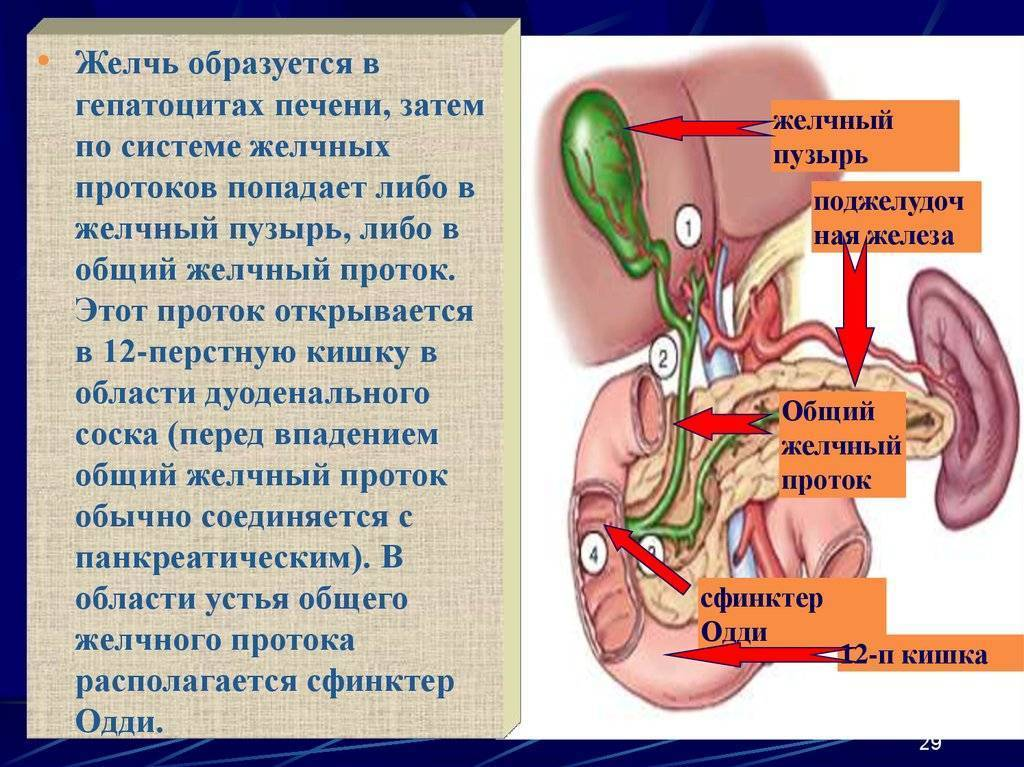 лечение желчного пузыря травами