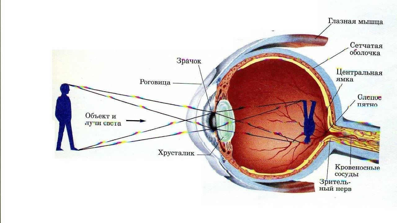 какое должно быть зрение у человека