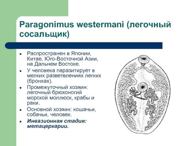 Парагонимоз – симптомы, лечение, диагностика, возбудители