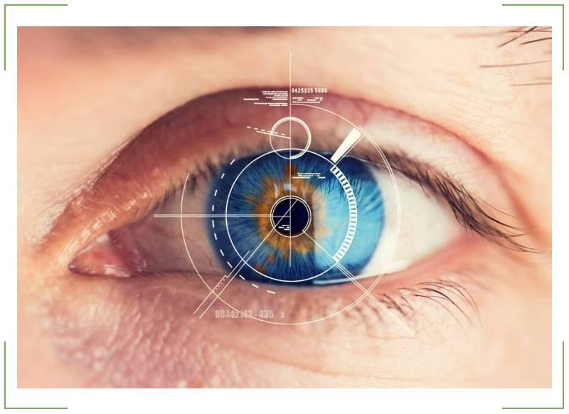 что расположено в сетчатке глаза