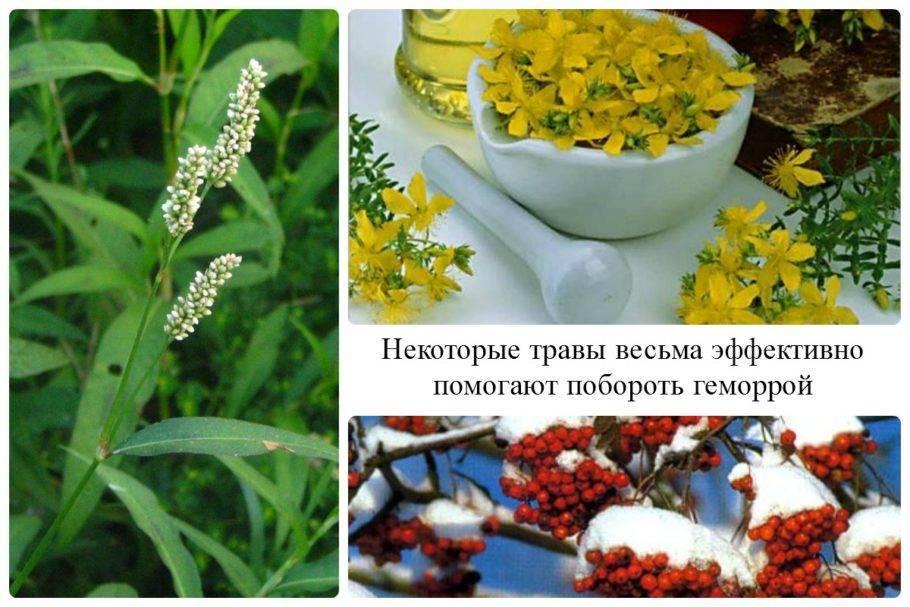 Лечение геморроя травами недорогие и эффективные