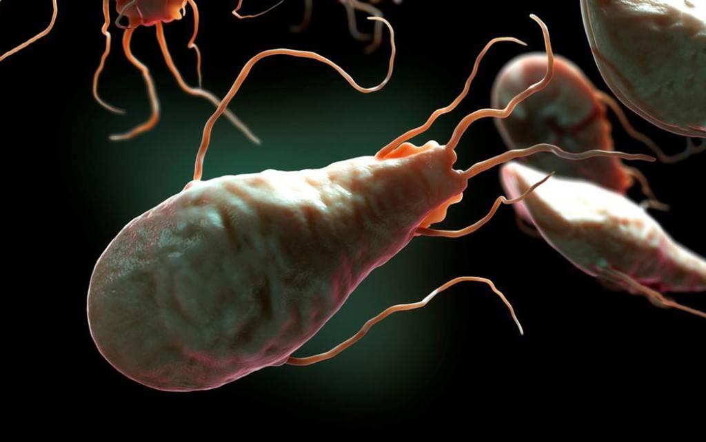 Лямблии — симптомы и лечение паразитов у детей