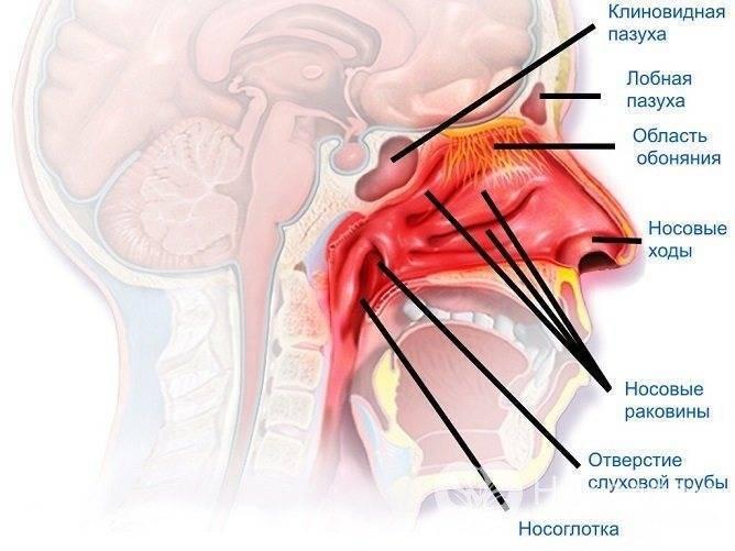 Медикаментозный вазомоторный ринит