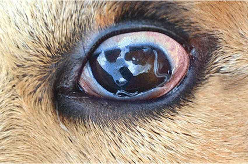 Глисты в глазах у человека: симптомы, профилактика, лечение