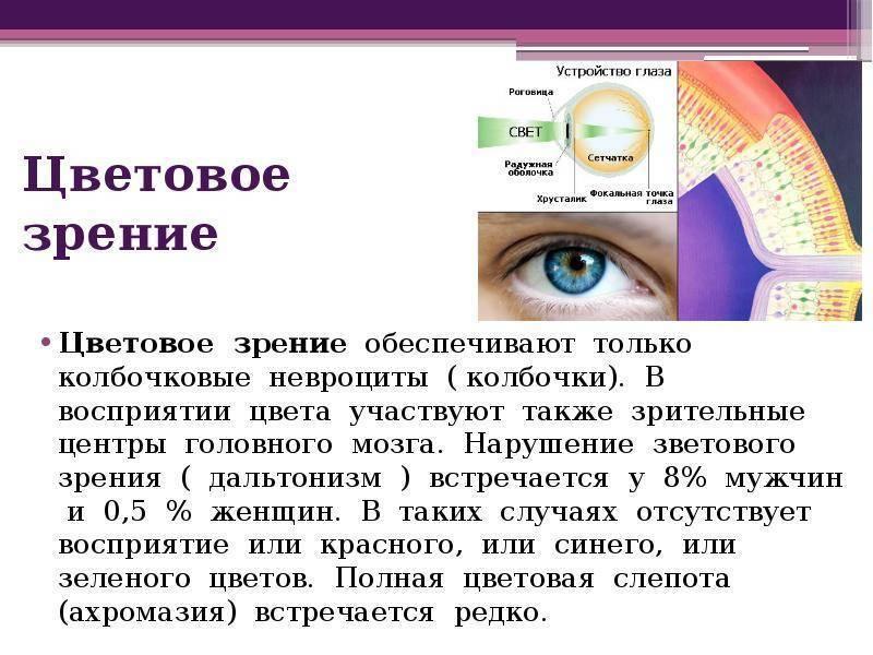 Особенности цветного зрения человека