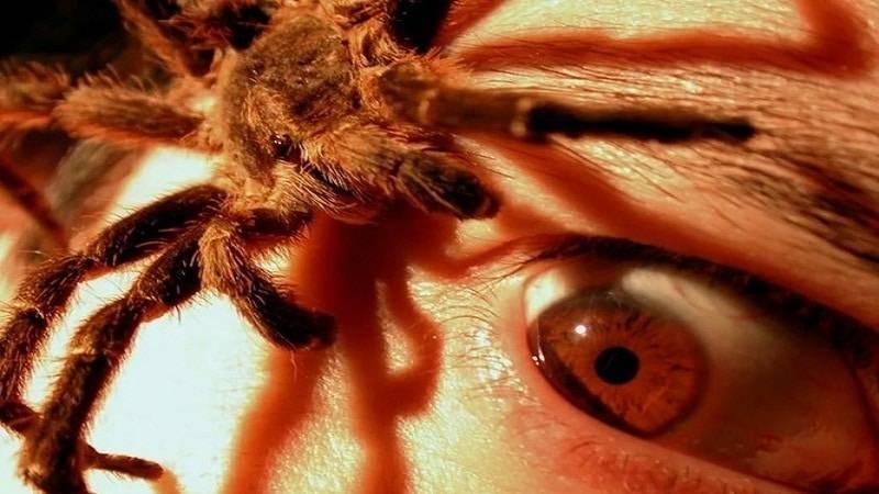 Причины апифобии: что это за болезнь, лечение боязни пчел и ос, чего опасаться