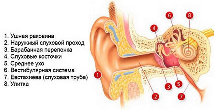 Болезни уха, горла и носа