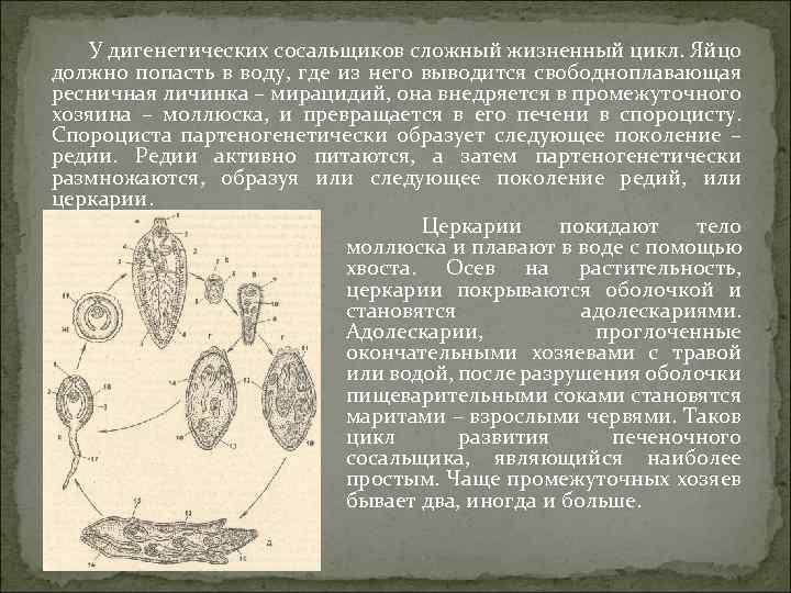 Паразитарные червь - parasitic worm - qwe.wiki