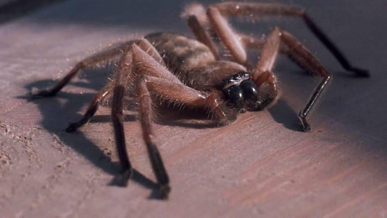 Арахнофобия – боязнь пауков, причины и лечение.