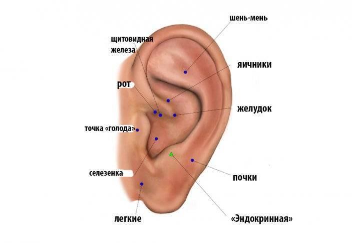 акупунктурные точки уха