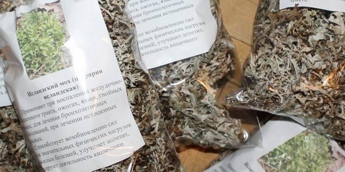 Исландский мох от кашля: полезные свойства и способы использования