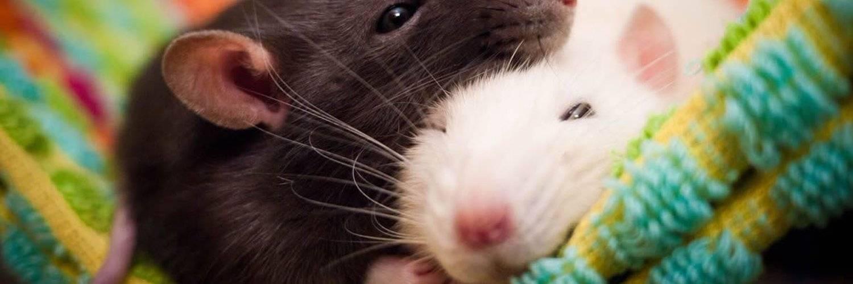 боязнь мышей как называется