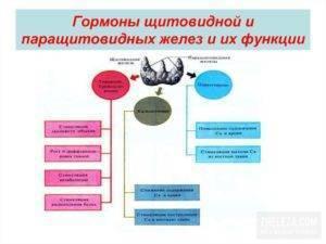 Паратиреоидный гормон (птг) – основные функции и нормы