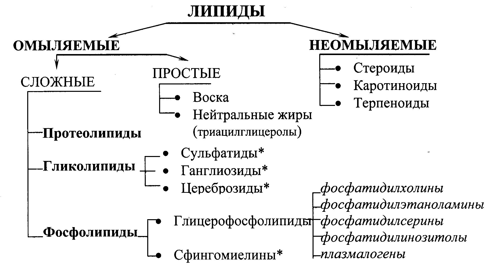 Липиды, их свойства и функции
